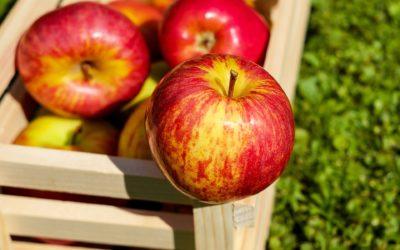 L'association Avalou Plabenneg organise la Fête de la pomme ce dimanche 20 octobre 2019